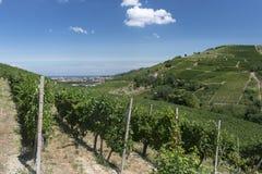 Виноградники в Oltrepo Pavese (Италия) стоковая фотография