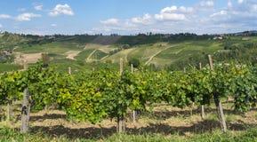 Виноградники в Oltrepo Pavese (Италия) стоковое фото