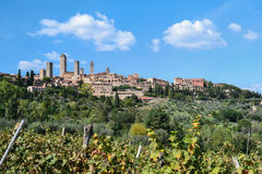 Виноградники в San Gimignano, Италии Стоковое Фото