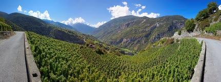 Виноградники в Visperterminen, Швейцарии - самых высоких виноградниках в Европе Стоковая Фотография RF