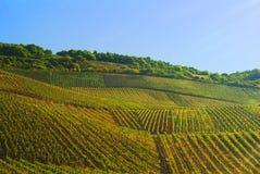 виноградники Германии Стоковые Изображения RF