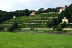 Виноградники, Дрезден Стоковая Фотография RF