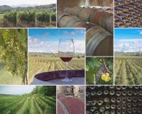 Виноградники и винодельни Стоковые Фото