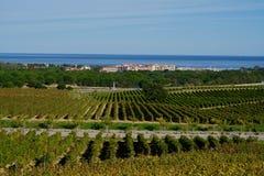 Виноградники и гавань mer sur Argeles Стоковая Фотография