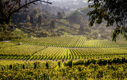 Виноградники и пути, который нужно бродяжничать через их Стоковая Фотография RF