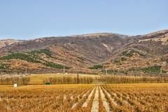 Виноградники и холмы Стоковое Фото