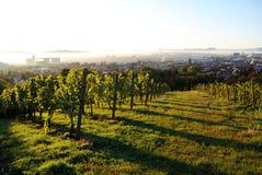Виноградники над городом, Марибор, Словения Стоковые Фото