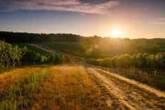 Виноградники на заходе солнца, чехии стоковые изображения