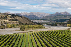 Виноградники на реке Awatere стоковое фото