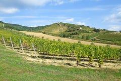 Виноградники на стороне холма, Tokaj Стоковое Фото