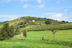 Виноградники на стороне холма, Tokaj Стоковое фото RF