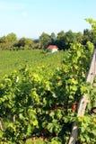 Виноградники на холме с милым маленьким домом в расстоянии Стоковое Изображение RF