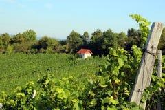 Виноградники на холме с милым маленьким домом, голубым небом Стоковое Изображение RF