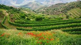 Виноградники на холмы, долина Дуэро, Португалия Ландшафт Стоковое Изображение