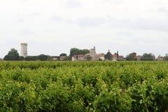 Виноградники около французской деревушки Montcalm, Vauvert Стоковая Фотография
