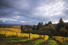 Виноградники осени, долина Willamette, Орегон стоковое фото rf