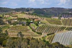 Виноградники острова Waiheke стоковые фотографии rf