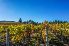 Виноградники долины Андерсона Стоковое фото RF