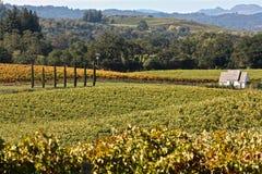 Виноградники долины Александра Стоковое фото RF