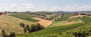 Виноградники долины Стоковое Изображение RF