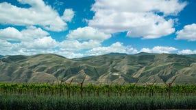 Виноградники побережья Калифорнии центральные Стоковая Фотография