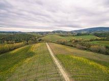 Виноградники Тосканы стоковое изображение