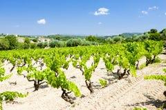 виноградники Франции Провансали Стоковые Фотографии RF