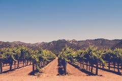 Виноградники Стоковые Изображения RF