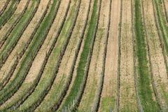 Виноградники 1 Стоковое фото RF