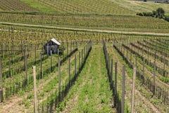 Виноградники 3 Стоковые Фото