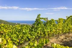 Виноградники Alella, Испания Стоковая Фотография RF