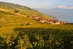Виноградники Lavaux Стоковое Изображение