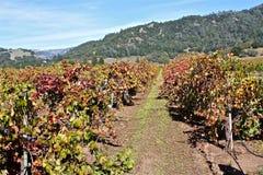 Виноградники Napa Valley Стоковые Изображения