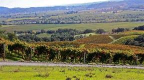 Виноградники Napa Valley Стоковое фото RF