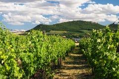 Виноградники Palava, южная Моравия, чехия Стоковые Изображения RF