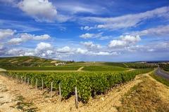 Виноградники Sancerre Стоковое фото RF