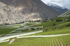 Виноградник весны в Чили Стоковые Фото