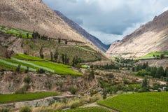 Виноградник весны Долина Elqui, Анды Стоковые Фотографии RF