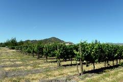 Виноградник винодельни Viu Manent Стоковое фото RF