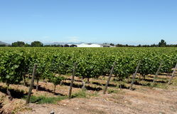 Виноградник винодельни Viu Manent Стоковое Изображение RF
