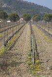 Виноградник вне деревни Menerbes, Провансали, Франции стоковые изображения