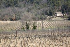 Виноградник вне деревни Menerbes, Провансали Стоковое фото RF