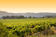 виноградник восхода солнца napa california Стоковое Фото