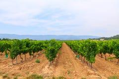 Виноградник в винодельческом регионе в Провансали стоковое фото rf
