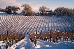 Виноградник в зиме Стоковое Фото