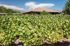 Виноградник в долине Чили Colchagua Стоковое фото RF