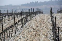 Виноградник в первом снеге Стоковое Изображение RF