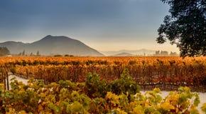 Виноградник в Сантьяго, Чили Стоковые Фото