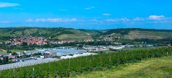 Виноградник в сельской местности на солнечный день Стоковые Фотографии RF