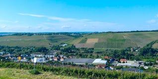 Виноградник в сельской местности на солнечный день Стоковые Изображения RF